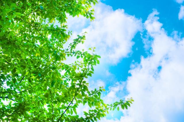 青空に新緑が映えている