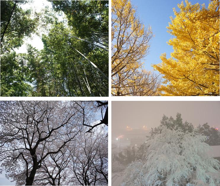 四季の木々